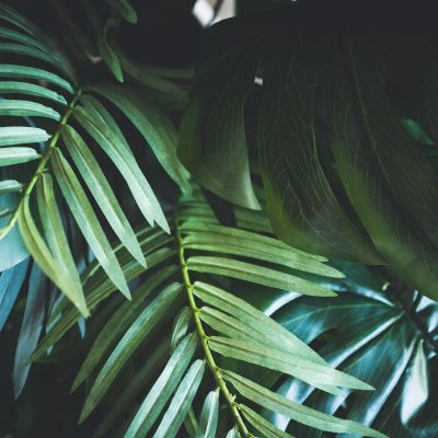 Leaves and Plants